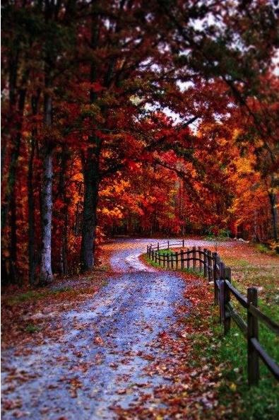 Otoño, fall, paseo, estación, naturaleza
