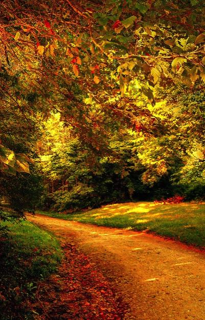 otoño, fall, naturaleza, paseo, arboles, colores
