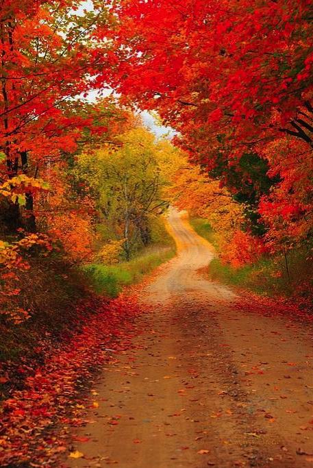 otoño, estación, naturaleza, fall, paseo, arboles